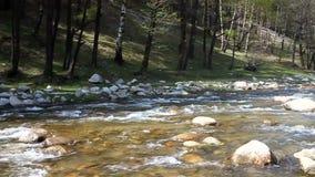 River stock video