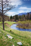 River of  mountains. Altai Stock Image