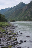 The river in mountains. The Katun river in Chemal district at Altai region in Siberia Stock Photography