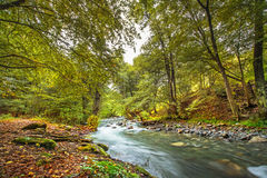 River in the mountains. Mountain river in fall forest with red yellow leafs and green grass in evening Stock Photos