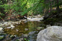 River Mumlava. (in Krkonoše mountains). An exclusive photo for using in nwspapers etc. The photo was taken near czech town Harrachov. 4th July 2015 Royalty Free Stock Images
