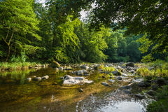 The river Murg in the Murg valley near Forbach Royalty Free Stock Images