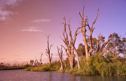 River murray sunset Stock Image