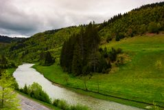 River near the forest on hillside on a cloudy day. Lovely springtime landscape in mountains Royalty Free Stock Photo