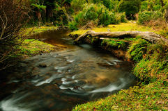 River. In New Zealand. Nature attractions in New Zealand stock photography