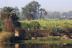 River Nile scenery between Aswan and Luxor Stock Photography