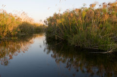 River in Okavango Delta Royalty Free Stock Photos