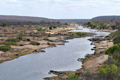 River Olifants with animal,Kruger NP,South Africa Stock Photography
