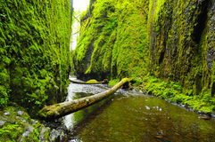 River in Oneonta Gorge 2. Oneonta River in Spring along the Gorge in Oregon Stock Image