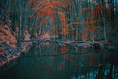 River Between Orange Leaved Trees Stock Images