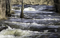 River Overflow. As the banks of the Grasse river overflows with the spring melt off Stock Images