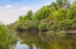River overgrown Butomus umbellatus flowers Stock Image
