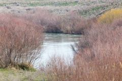 River overgrown Royalty Free Stock Images
