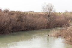 River overgrown Stock Photo