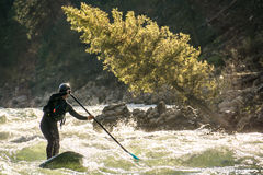 River paddle boarder. Royalty Free Stock Image