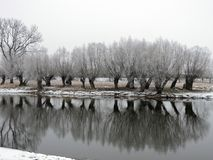 River and snowy winter trees, Lithuania Royalty Free Stock Photo