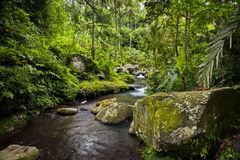 The River Pakrisan. Located near the sacred temple of Gunung Kawi, the river Pakrisan flows through rainforest and tropical jungle on the idyllic island of Bali Stock Images