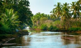 River and palm forest Royalty Free Stock Photography