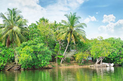 river with palm trees on  shores Royalty Free Stock Image