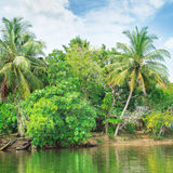 river with palm trees on  shores Royalty Free Stock Photography