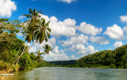 River and Palms, Dominican Republic Stock Photos