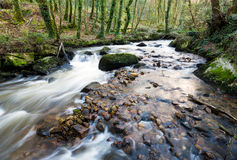 The River Par. Cascading over mossy boulders at Ponts Mill in the Luxulyan Valley near St Austel in Cornwall Royalty Free Stock Image