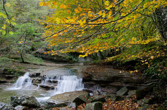 River in the Park of Casentino Forests Italy Stock Photo
