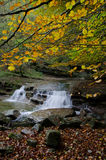 River in the Park of Casentino Forests Italy Stock Photography