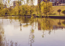 River in the park Royalty Free Stock Photo
