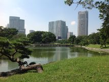 River in the park next to skyscrapers Stock Photo