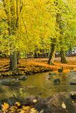 River in park Royalty Free Stock Photo