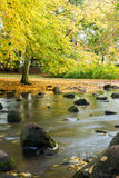 River in park Stock Photography