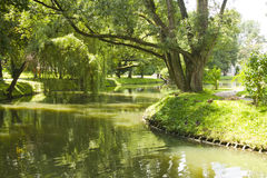 River in park during summer Stock Image