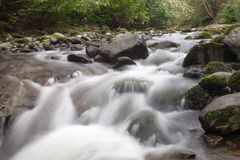 River passing through forest Stock Photography
