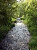 River path in greens. Water and green trees Royalty Free Stock Images