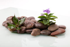 River Pebbles. A shot of river pebbles in a pile with some plants on them Stock Image