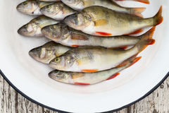 River perch in a white basin on the wooden stool Royalty Free Stock Image