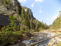 River. Picture of river and boulders with tress Royalty Free Stock Photography