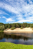 River in a pine forest with a sandy beach. Stock Photography