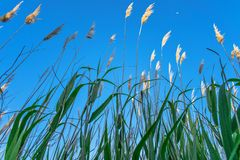 River plant. S on blue sky Stock Photography