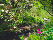 River plants and flowers in a garden Royalty Free Stock Photos