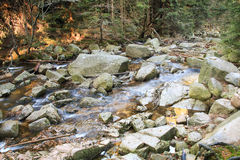 River in the Polish forest. Mountain rocks covered with moss Royalty Free Stock Photos
