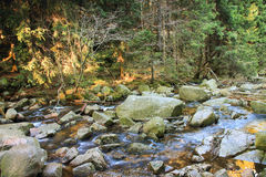 River in the Polish forest. Mountain rocks covered with moss Stock Photography