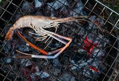 River prawn grilled Stock Image