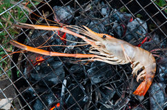 River prawn grilled Royalty Free Stock Photography
