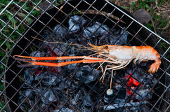 River prawn grilled Royalty Free Stock Images