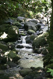 River in rain forest Royalty Free Stock Images
