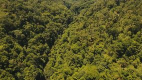 River in the rainforest Bali,Indonesia. Aerial view of River in the rainforest. River in the mountains among the tropical jungle. Bali, Indonesia. 4K video stock video footage