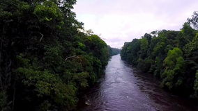 River in the rainforest. Camera moving down to the river. Flying over the river in the tropical jungle. The river in the jungle. The camera slowly rises over the stock footage