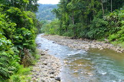 River in a rainforest in Costa Rica. A river with rocks in a rainforest in Costa Rica royalty free stock photo